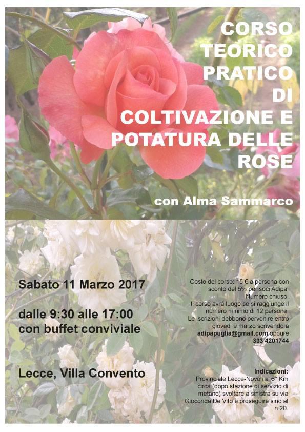 Adipa puglia iniziative eventi for Potatura delle rose
